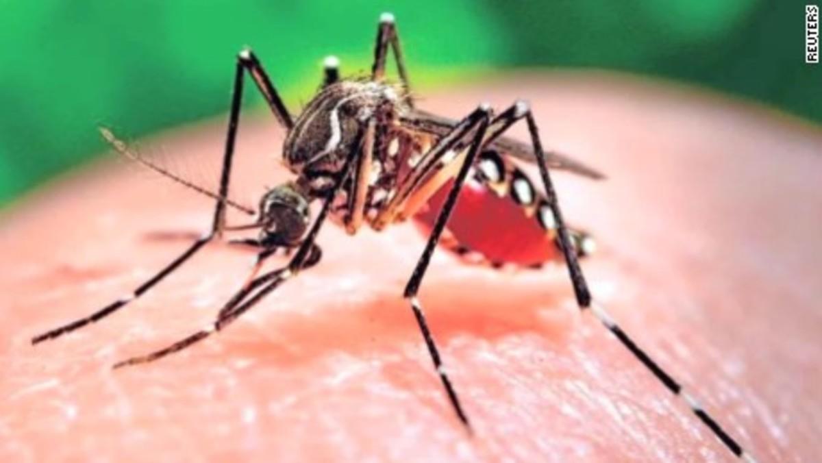 Are we Overreacting to the Zika Virus?