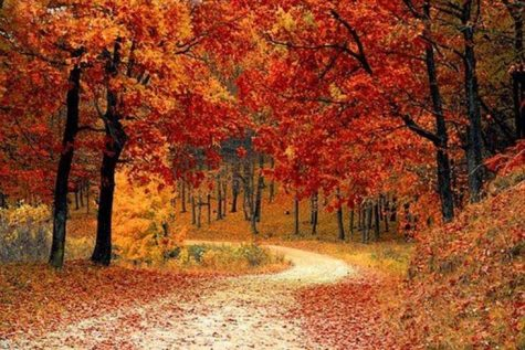 The Fluttering of Fall